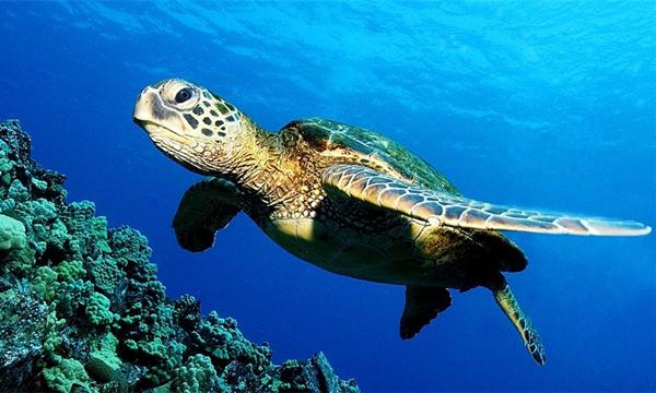 泰国普吉岛斯米兰船宿潜水